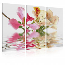 Tableau Orchid with colorful spots