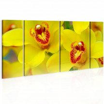 Tableau Orchids intensity of yellow color
